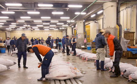 auctioning: Tokyo, Japan - November 12, 2015: Famous Tuna auction at Tsukiji fish market. Tsukiji is the biggest fish market in the world. The Tuna auction is the main attraction for tourists.