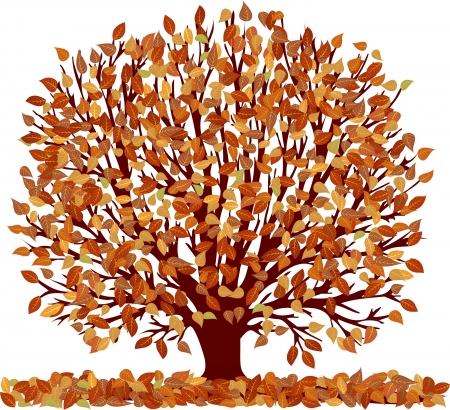 vector autumn tree isolated on white Vector