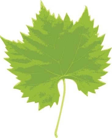 vectorized: vectorized grape leaf Illustration