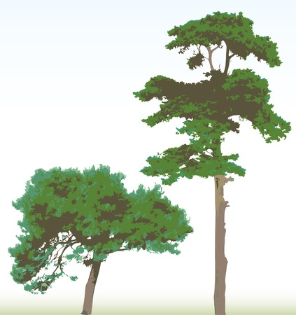vector pine trees in three green colors with background in separate layer