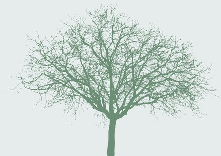 vector illustration of the wide tree Vector
