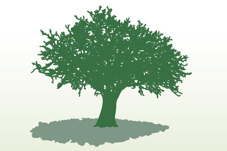 oak tree: vector tree