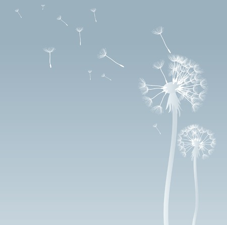 blows: vector dandelion background