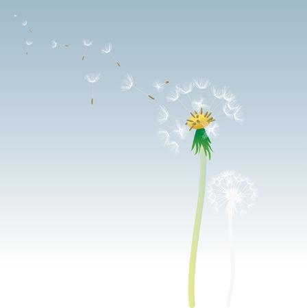 vector dandelion with flying seeds Stock Vector - 5890129