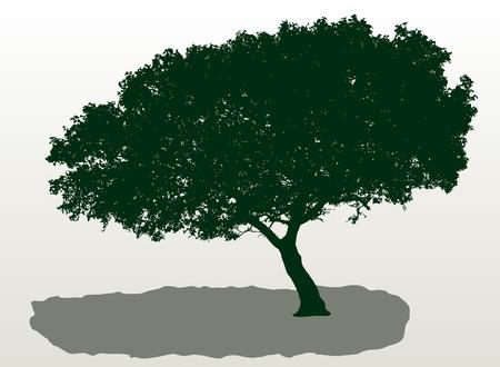 vector mediterranean tree Vector
