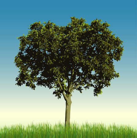 vector nut tree alone on meadow Vector