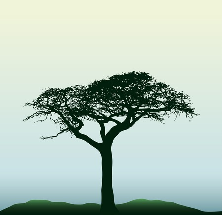 silhouette of the baobab tree Vector
