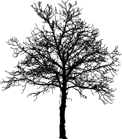 branch cut: tree in winter