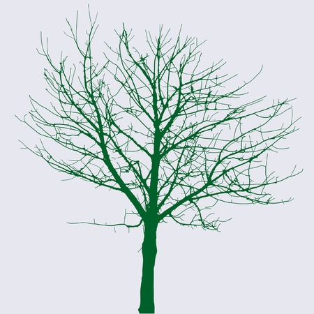 drawing of the naked winter tree Vector