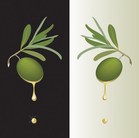 olive on branch with oil drop Vector