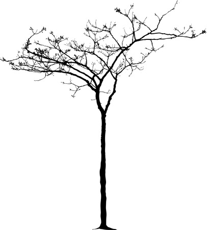 vector drawing of the small naked winter tree Vector