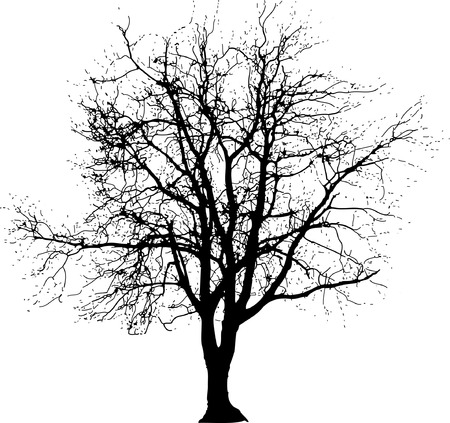 drawing of the big naked winter tree Vector