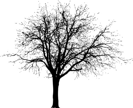 drawing of the winter tree Vektorové ilustrace