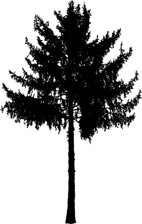silhouette of the fir tree Vector