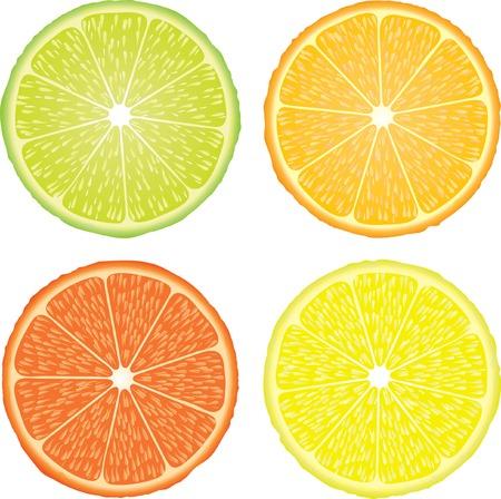 orange cut: ilustraci�n vectorial de los cuatro c�tricos