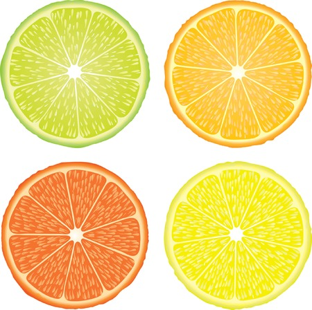 orange slices: vector illustration of the four citrus fruits