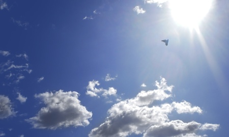 flying dove on sun with fluffy clouds photo