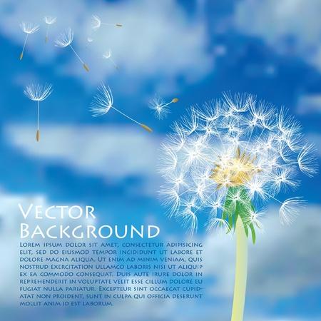 Tarassaco vettoriale con volo semi sul cielo nuvoloso