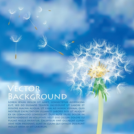 dandelion wind: vector dandelion with flying seeds on cloudy sky Illustration