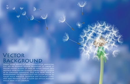 softness: dandelion with flying seeds on cloudy sky Illustration