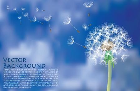 diente de León con vuelo semillas el cielo nuboso Ilustración de vector