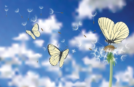 vector illustration of the butterfly on dandelion Vector