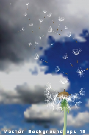 flimsy: dandelion with flying seeds on cloudy sky Illustration