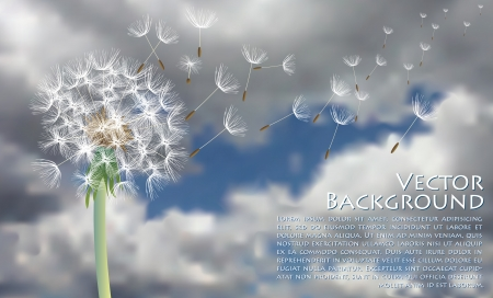 vector dandelion with flying seeds on stormy sky Vector