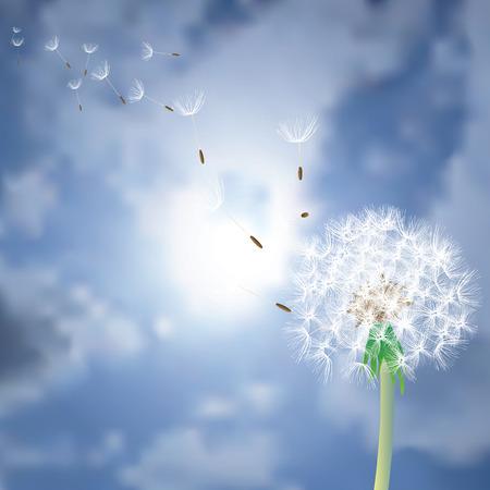 태양에 비행 씨앗 벡터 민들레