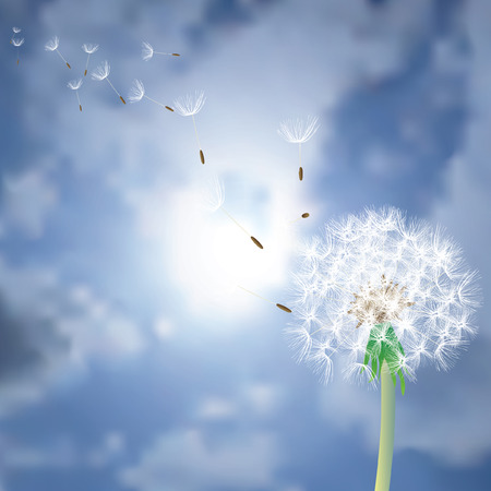 vector dandelion with flying seeds over the sun Çizim