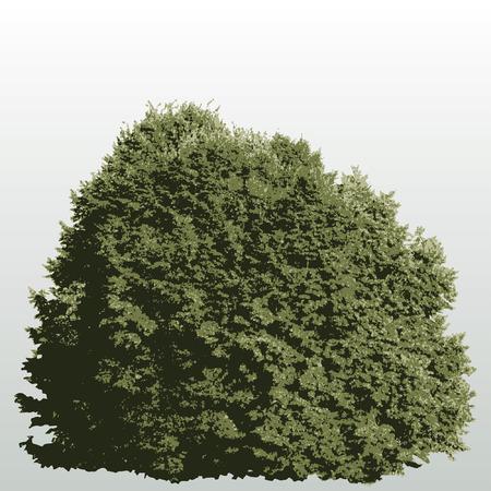 plats: vector big bush Illustration