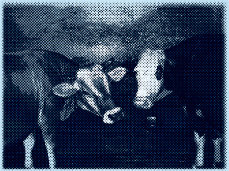 hoofed mammal: vector cows in dotted raster halftone