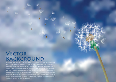 flimsy: vector dandelion with flying seeds on cloudy sky Illustration