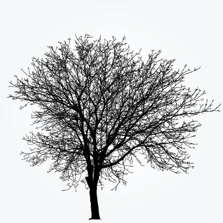 winter tree: drawing of the big winter nut tree