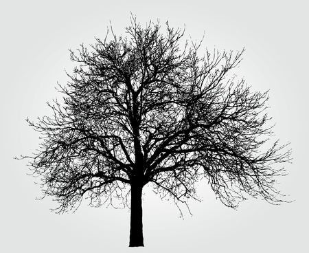 branch cut: drawing of the big winter tree Illustration