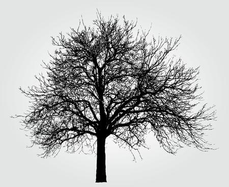 Zeichnung des großen Winterbaum