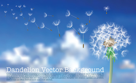 posterity: dandelion with flying seeds on cloudy sky Illustration