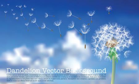 diente de León con vuelo semillas el cielo nuboso