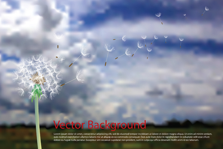 overblown: dandelion with flying seeds on cloudy sky Illustration
