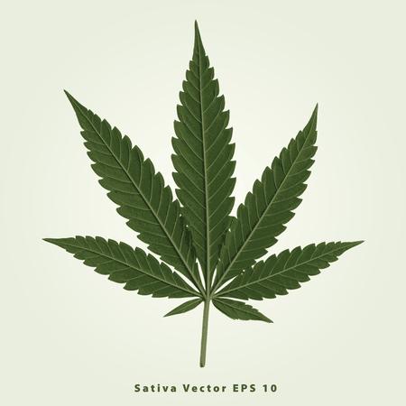 大麻イネ葉、イラスト、マリファナの葉、医療用マリファナ、マリファナ、大麻植物。  イラスト・ベクター素材