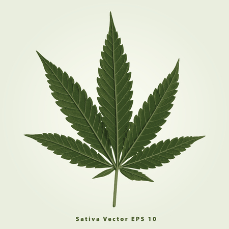 cannabinoid: cannabis sativa leaf, illustration, marijuana leaf, medical marijuana, marijuana plant, cannabis plant.