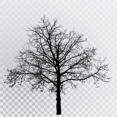 winter tree silhouette: drawing of the transparent silhouette winter tree