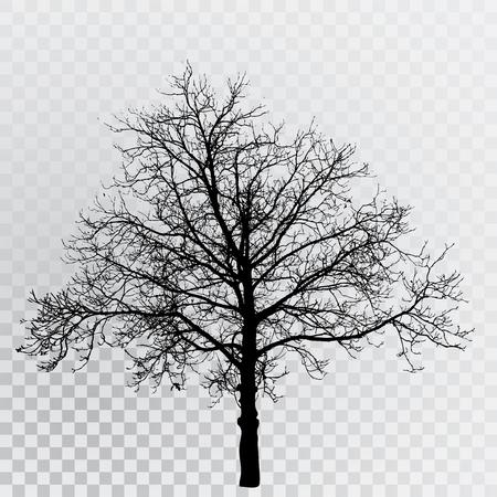 Dibujo de la silueta transparente árbol de invierno