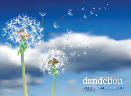 dandelion with flying seeds on cloudy sky, symbolic background