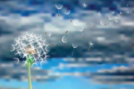 vector Dandelion with flying seeds on cloudy sky, symbolic background