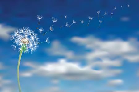 dandelion seeds fly in sky, vector illustration Illustration