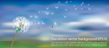 vector dandelion with flying seeds on cloudy sky with green landscape