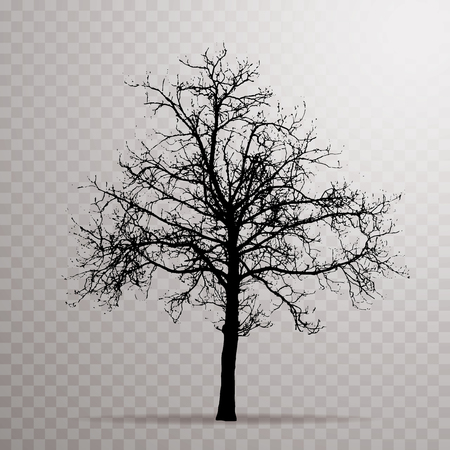 vector drawing of the transparent silhouette naked winter tree Ilustração