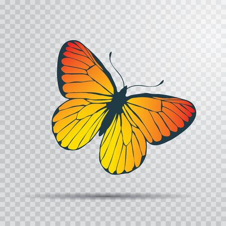 butterfly icon - Colorful Butterfly isolated, Beautiful Butterfly illustration Иллюстрация