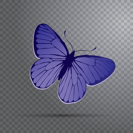 Polyommatus icarus butterfly icon - Colorful Butterfly isolated, Beautiful Butterfly illustration